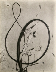 Edward Weston - Kelp, 1930 - Howard Greenberg Gallery