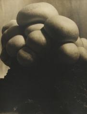 John Vanderpant - Untitled (variant of Mushrooms), c.1930 - Howard Greenberg Gallery