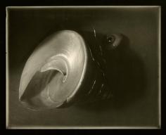 Josef Sudek - Shell and Eyeball Arrangement from Memories Cycle, 1956 - Howard Greenberg Gallery