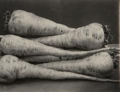 Charles Jones - Parsnip Student, c.1900- Howard Greenberg Gallery