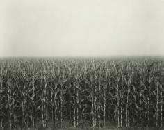 Rhondal McKinney - 877, 1980 - Howard Greenberg Gallery