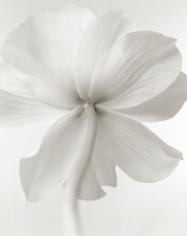 Yumiko Izu - Secret Garden Blanc 61, 2008 - Howard Greenberg Gallery