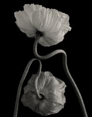 Yumiko Izu - Secret Garden Noir 7, 2004 - Howard Greenberg Gallery