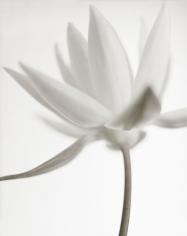 Yumiko Izu - Secret Garden Blanc 111, 2011 - Howard Greenberg Gallery