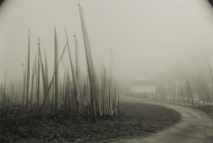 Kenro Izu: Stillness 2007 2008 Howard Greenberg Gallery