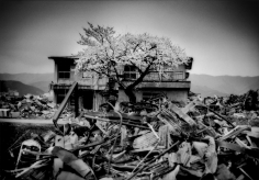 James Whitlow Delano, Black Tsunami, Sakura cherry blossoms have opened on a tree that seems to rise right out of the rubble. Ofunato, Iwate Prefecture, Japan, 2011, Sous Les Etoiles Gallery