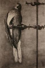 William Kentridge Birdcatcher