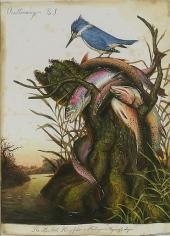 Ornithomancy No. 3a