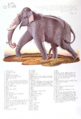 Nila 2000 9-color lithograph