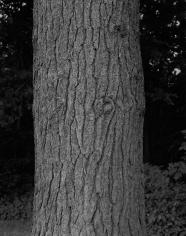 Stephen Shore, Untitled (Tree), 1990