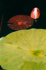 Grünes Blatt, rotes Blatt mit Knospe, 2015