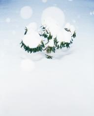 Schneestrauch, 2016