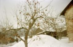 Apfelbaum, 2010