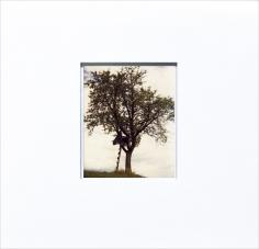 Gallusberg Baum 1 (Tree at Gallusberg) 01 08 06, 2006