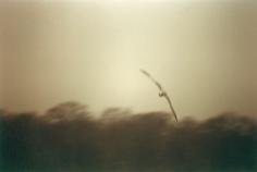 Vogel 68 °, 2000
