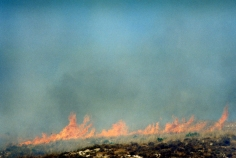 Feuer, 2004