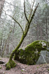 Jessica Lim Yosemite Moss