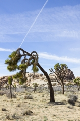 Jessica Lim Joshua Tree and Contrail