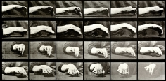 Eadweard Muybridge Hand Drawing a Circle, plate 532