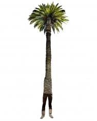 Annie Buckley, Phung Royal Palm, 2008/2014