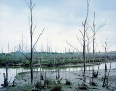 Dead Trees, Spain, 2001