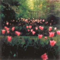 Crathes Castle Garden, near Aberdeen, Scotland, 1994