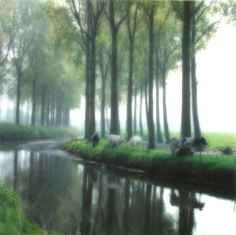 Cows, Belgium (5-95-26c-5), 1995 Chromogenic print, 28 x 28 inches