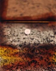 """Process Interchange Format #1"", 2009, 10 x 8 inch Chromogenic Print, Edition of 5"