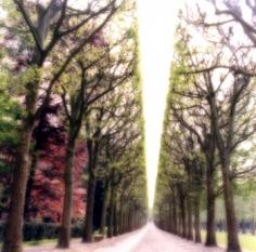 """""""Parc de Sceaux, France, 2008""""  [4-07-6c-9], 19 x 19 inch / 28 x 28 inch Chromogenic Print; Edition of 15 / 38 x 38 inch Chromogenic Print; Edition of 6"""