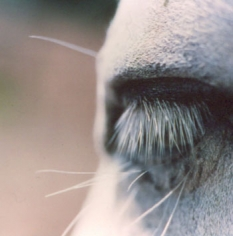 Untitled #23 from the Horse's Eyes Series