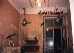 """Bertien van Manen, """"St. Petersberg (Birds in Room),"""" 1991, Chromogenic print, 16 x 20 inches, Edition of 10"""
