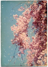 Untitled #1016from the seriesA Box of Ku, 3x 5inch archival pigment print