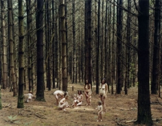 Justine Kurland, Pine Forest, 2005, 30 x 40 inch C-print, Signed, titled, dated and editioned on verso, Edition of 8