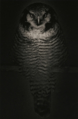 """""""Untitled #1575,"""" 2009, Gelatin Silver print, 9.5 x 6.25 inches, ed. of 20"""
