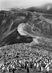 """Sebastiao Salgado, """"Antarctica (Penguins On the March),"""" 2005, Gelatin Silver print, 35 x 24 inches"""