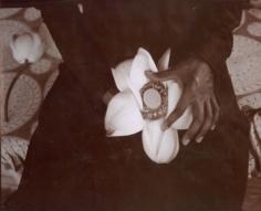 Lotus, Kashmir, India, 1985