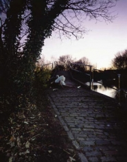 Up Before the Beak: Angry Swan guards Bridge after Crash, 2003, 60 x 48 inch Cibachrome Print, Signed, titled, dated and editioned on label on verso