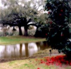 """Avery Island, Louisiana, 2007""  [2-07-20c-1], 19 x 19 inch / 28 x 28 inch Chromogenic Print; Edition of 15 / 38 x 38 inch Chromogenic Print; Edition of 6"