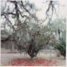 Avery Island, SC (2-96-11c-1), 1996 Chromogenic print, 28 x 28 inches