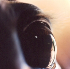 Untitled #41 from the Horse's Eyes Series, 1999