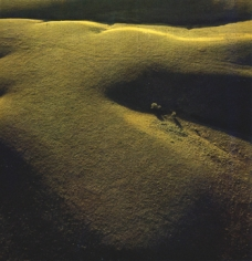 Konza Prairie, June, 1982. Chromogenic print. Available at 30 x 30 or 40 x 40 inch chromogenic print