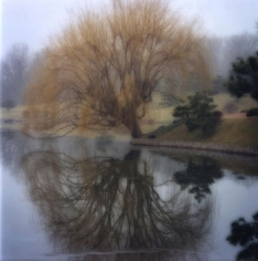 Chicago Botanic Garden, 2004 (1-04-3c-3), 19 x 19 and 28 x 28 inch Chromogenic print, Edition of 15 per size