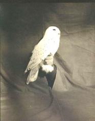 """Victor Schrager, """"Snow Owl,"""" 1996, Pigment print, 47 x 35 inches, Edition of 11"""