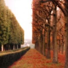 """""""Parc de Sceaux, France, 2008""""  [10-08-9c-9], 19 x 19 inch / 28 x 28 inch Chromogenic Print; Edition of 15 / 38 x 38 inch Chromogenic Print; Edition of 6"""