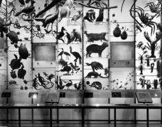 """Matthew Pillsbury, Spectrum of Life, Museum of Natural History, NYC, 2004, 30 x 40"""" Pigmented Ink Print, Signed, titled and dated on verso"""