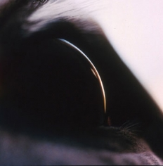 Untitled #11 from the Horse's Eyes series, 1999