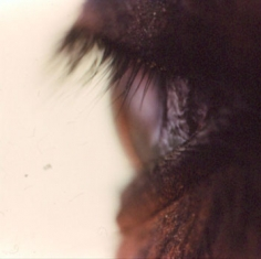 Untitled #26 from the Horse's Eyes Series, 1999