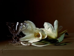 Magnolia with Wild Leeks, 2008, 14 x 17 inch, chromogenic print, Edition of 7, Signed, titled, dated and editioned on label on verso