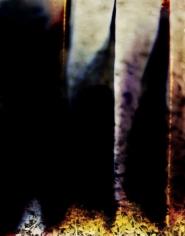 """Dandelion 2"", 2008, 20.125 x 15.625 inch Chromogenic Print, Edition of 7"