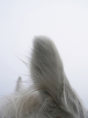 Untitled, 2011,10.5 x 7 inch archival pigment print
